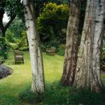 Woodland Garden, Kew, 2007, chromogenic print, 91 x 121.5 cm.