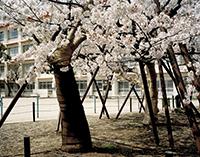 Kayokos_trees_200px