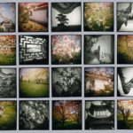 May at The Botanical Garden, 1993, 20 gelatin silver & chromogenic prints, 68 in. x 84 in.