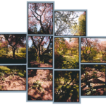Alexander Muir Park, 2002, 13 chromogenic prints, 29 in. x 39 in.