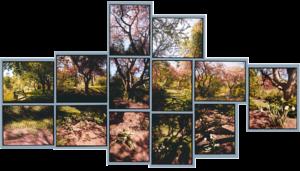 Alexander Muir Park, 2002, 13 chromogenic prints, 29 in. x 39 in.