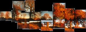 Cedarvale Ravine, 2002-03, 15 chromogenic prints, 18in. x 39 in.
