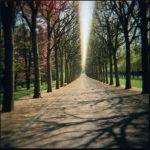 Grande allée, Parc de Sceaux, 1997, chromogenic print, 19 in. x 19 in.