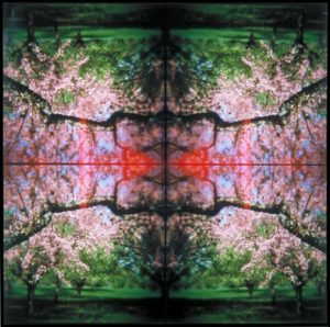 Kaleidoscape # 2, 1995-96, four chromogenic prints mounted on board, overall 48 in. x 48 in.