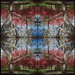 Kaleidoscape # 4, 1995-96, four chromogenic prints mounted on board, overall 48 in. x 48 in.